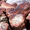 Petrified Forest <br>National Park