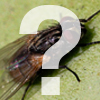 What is...insect?
