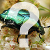 What is...invertebrate?