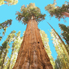Sequoia <br>National Park