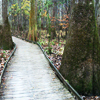 Congaree <br>National Park