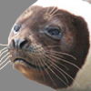 Seal, Ribbon