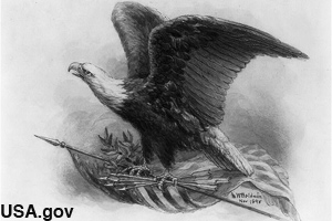 Early drawing of the United States national bird