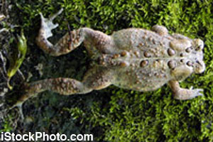 The full body of a toad