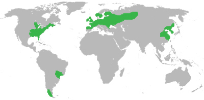 Location of the temperate (deciduous) forest biomes